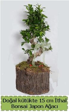Doğal kütükte İthal bonsai japon ağacı  Bitlis çiçek gönderme