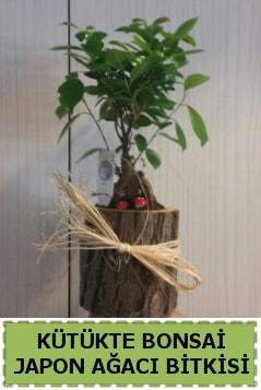 Kütük içerisinde doğal bonsai ağacı  Bitlis çiçekçi telefonları