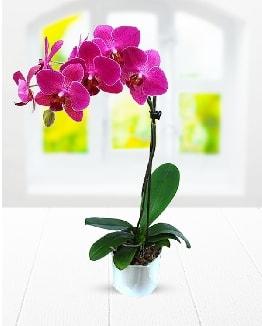 Tek dallı mor orkide  Bitlis çiçek satışı