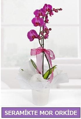 Seramik içerisinde birinci kalite tek dallı mor orkide  Bitlis İnternetten çiçek siparişi
