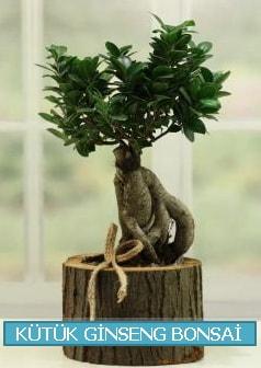 Kütük ağaç içerisinde ginseng bonsai  Bitlis çiçek gönderme sitemiz güvenlidir