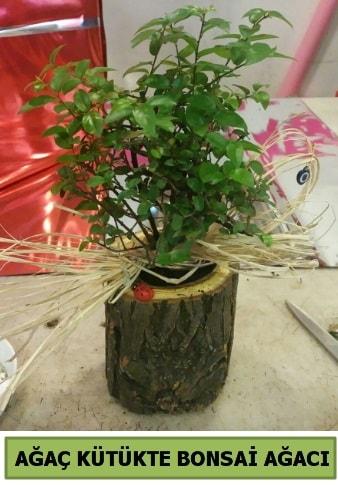 Doğal ağaç kütük içerisinde bonsai ağacı  Bitlis çiçek gönderme sitemiz güvenlidir