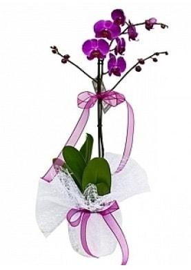 Tekli Mor Orkide  Bitlis çiçek yolla