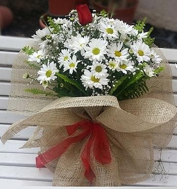Papatya 1 adet kırmızı gül buketi  Bitlis çiçekçiler