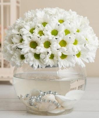 Fanusta beyaz Papatya  Bitlis çiçek satışı