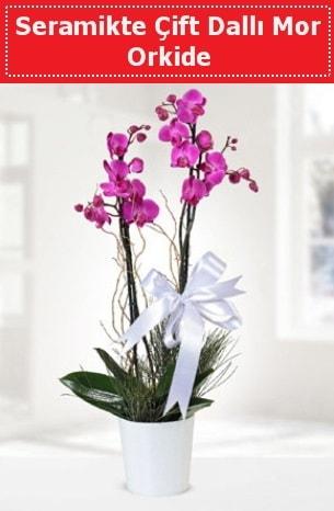 Seramikte Çift Dallı Mor Orkide  Bitlis anneler günü çiçek yolla