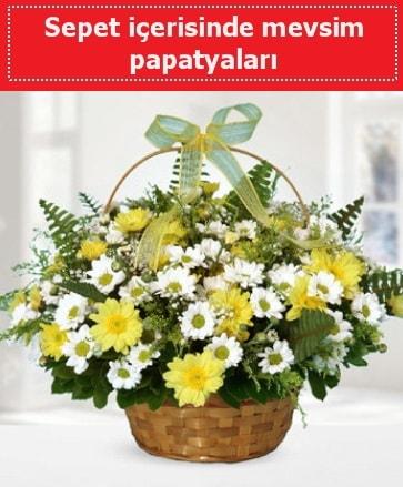 Sepet içerisinde mevsim papatyaları  Bitlis ucuz çiçek gönder