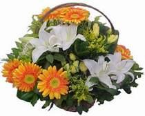 Bitlis online çiçekçi , çiçek siparişi  sepet modeli Gerbera kazablanka sepet